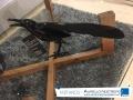 pajaro-ave-mesa-negro-decoracion-adorno-almacen-aurelio-restrepo-j-deko-manizales-caldas-colombia-muebles-decoracion-interiores