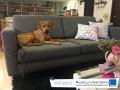 sofa-tela-gris-almacen-aurelio-restrepo-j-deko-manizales-caldas-colombia-muebles-decoracion-interiores